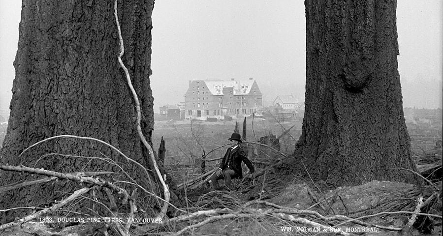 Douglas fir trees, Vancouver, 1887
